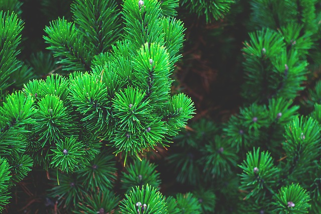 The Importance of Evergreen Content